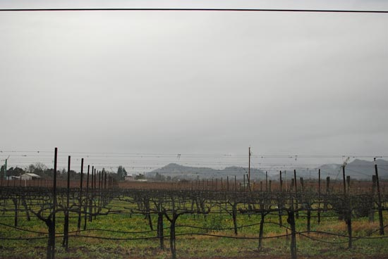 Andretti Winery vineyard